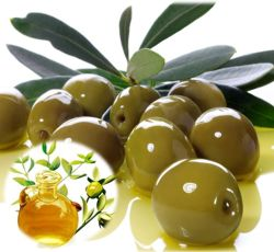 Essential Oil Division Jojoba Oil (Clear) 1 jojoba_oil